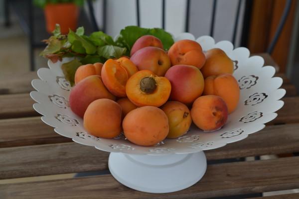 albicocche giornata nazione aifb calendario cibo italiano